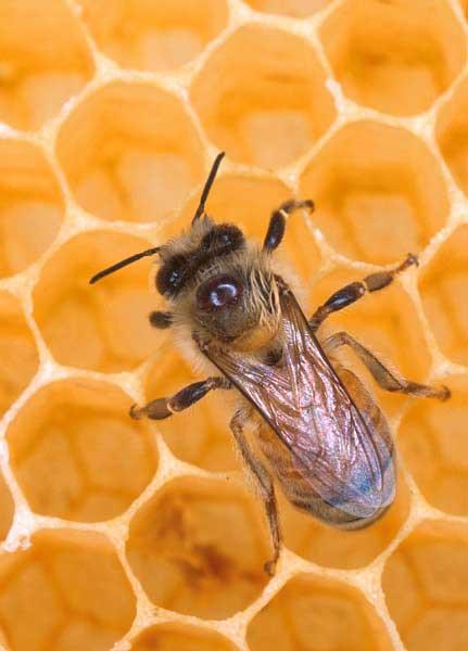 το-μέλι-ο-βασιλικός-πολτός-και-τα-παιδιά