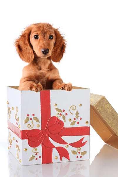 Πρώτα-ο-σκύλος-και-μετά-το-μωρό-Οδηγίες-για-αρμονική-συνύπαρξη