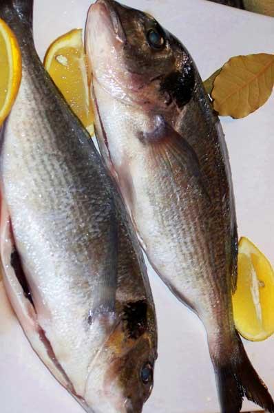 Ψάρια-και-θαλασσινά-για-μικρούς-και-μεγάλους