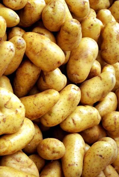patates_ogkraten