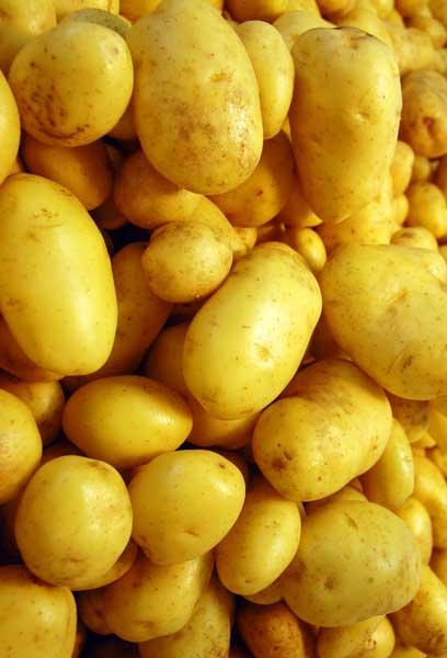 PatatesManitaria